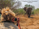Elephant Close Encounter --  Zimbabwe
