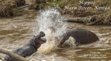 Hippos of the Mara River Kenya