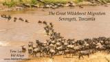 Wildebeest Migration, Mara River Crossing