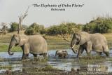 Elephants of Duba Plains Botswana