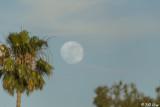 Full Moon  1J