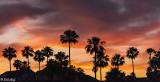 Discovery Bay Sunset  4J