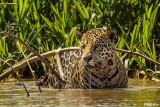 Brazil & The Pantanal