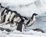 Antarctica 2017 by Linda Klipp