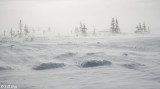 Blowing snow over Tundra  1