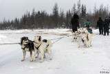 Kelly's Dog Sled Camp  4