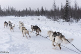 Kelly's Dog Sled Camp  5