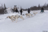 Kelly's Dog Sled Camp  8