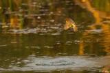 Birds of the Delta