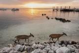 Mammals of the Florida Keys