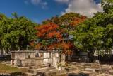 Royal Poinciana, Key West Cemetery  4