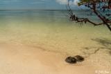 Horseshoe Crabs, Marquesas Keys  5