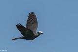 Birds of the Florida Keys