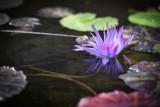 fiori e baci