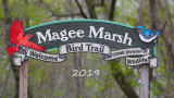 magee_marsh_2019