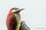 Équateur 2019 - Ornithologie