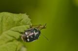 Coléoptères et les  autres