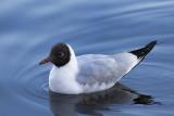 oiseaux du lac