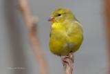 Recent Additions - Birds