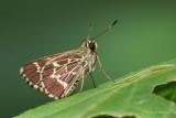Recent Additions - Butterflies & Moths