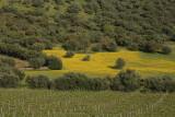 Near Monsaraz