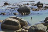 Boulder's Beach