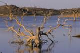 Dead Tree, Namibia