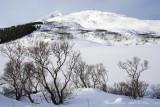 Steinfjordv, 68.235703,13.707974