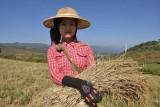 Taunggyi to Pindaya