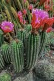 Desert Garden 3