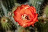 Desert Garden 9