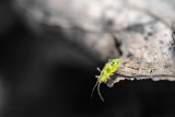 Insects Macro