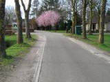 11_heeswijk-dinther.jpg