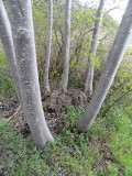 20_oosterhout.jpg