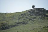 Lower Galilee