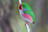 Birds Cuba