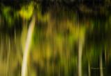 Landscapes at Heron Haven