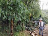 Coffee plantation tour