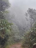 Foggy on Montezuma Rd