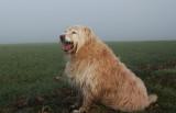 Foggy morning Oz.
