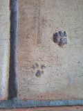 Paws on the floor
