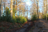 Up a muddy track