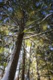 Underneath a hemlock tree