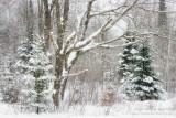 Winter scene, snow storm