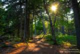 Favorite walk through the woods