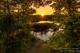 Sunset framed by trees