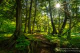 Woodland path with sunburst