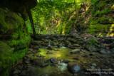 Parfrey's Glen, creek 1