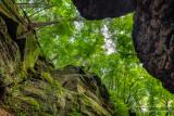 Parfrey's Glen gorge, looking up