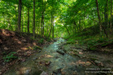 Parfrey's Glen, creek 2